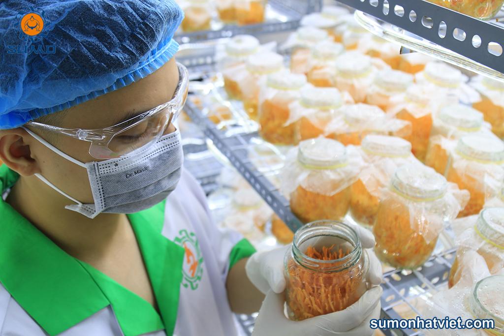 Nuôi cấy đông trùng hạ thảo trong phòng thí nghiệm
