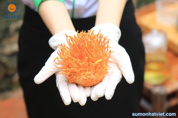 Đông trùng hạ thảo tươi tại Sumo Nhật Việt