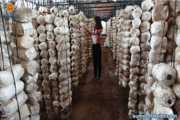 Kết quả vượt trội khi công ty thay đổi mô hình trồng nấm