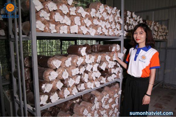 Trung tâm thực nghiện nuôi trồng giống nấm của Sumo