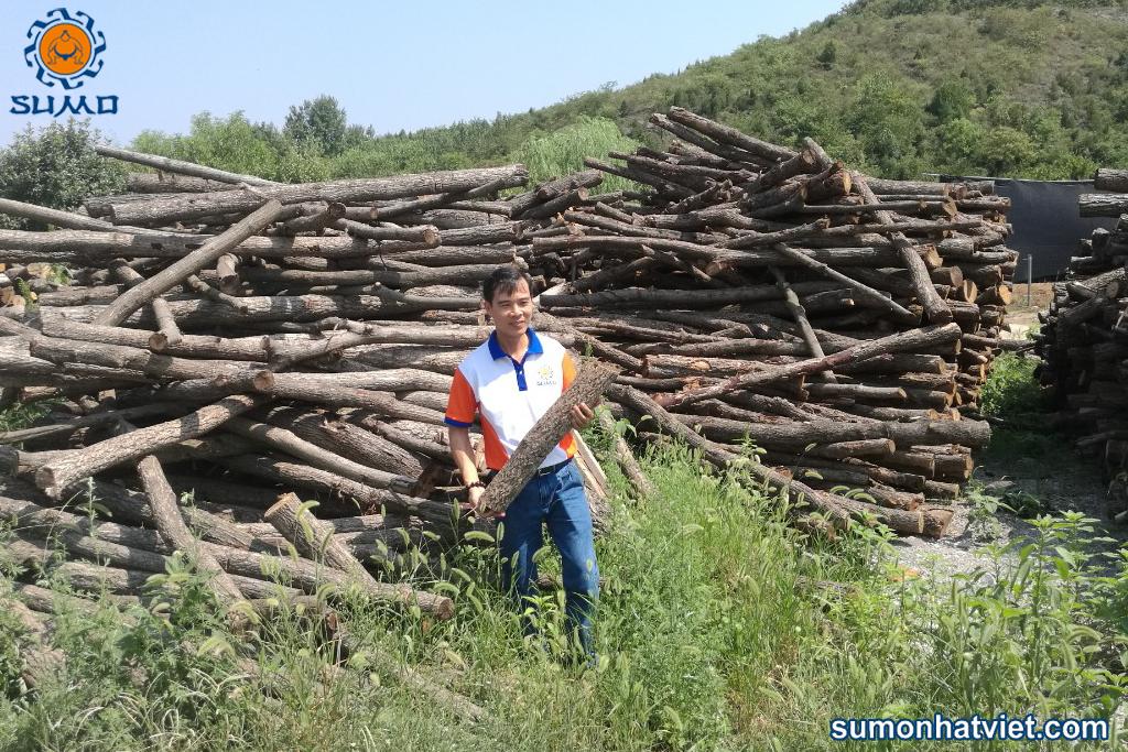 Nguyên liệu gỗ trồng nấm