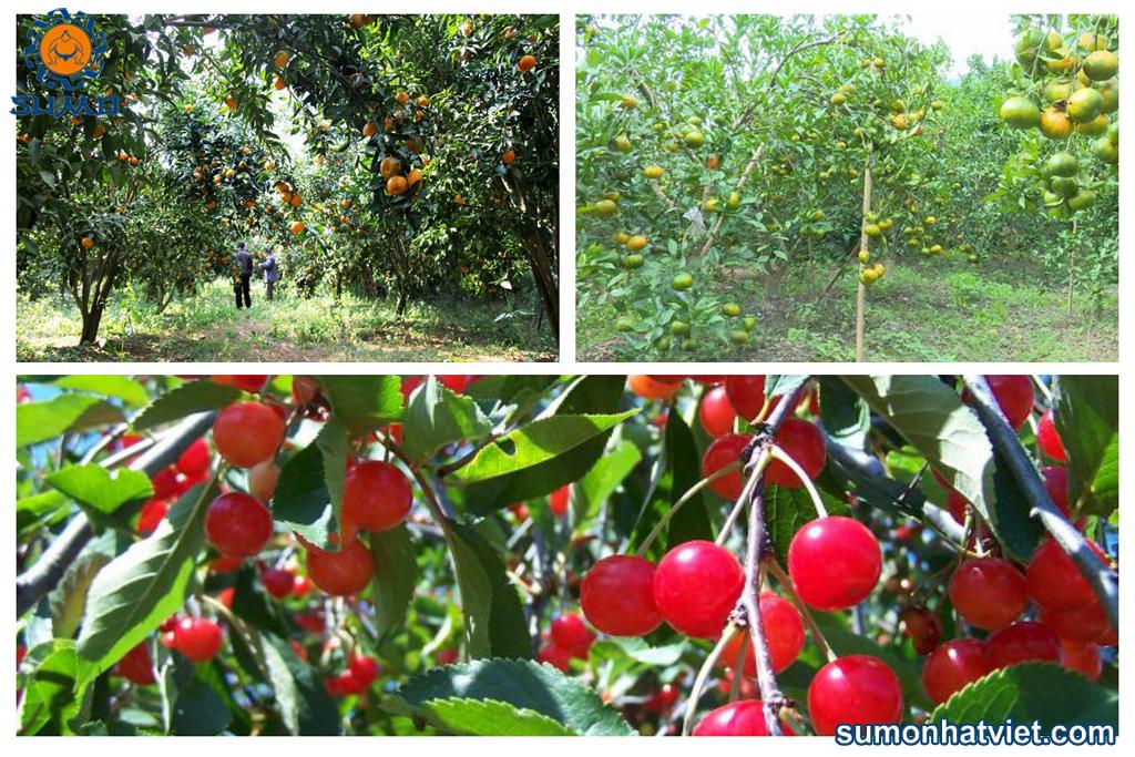 Các yếu tố ảnh hưởng trực tiếp tới năng suất cây trồng