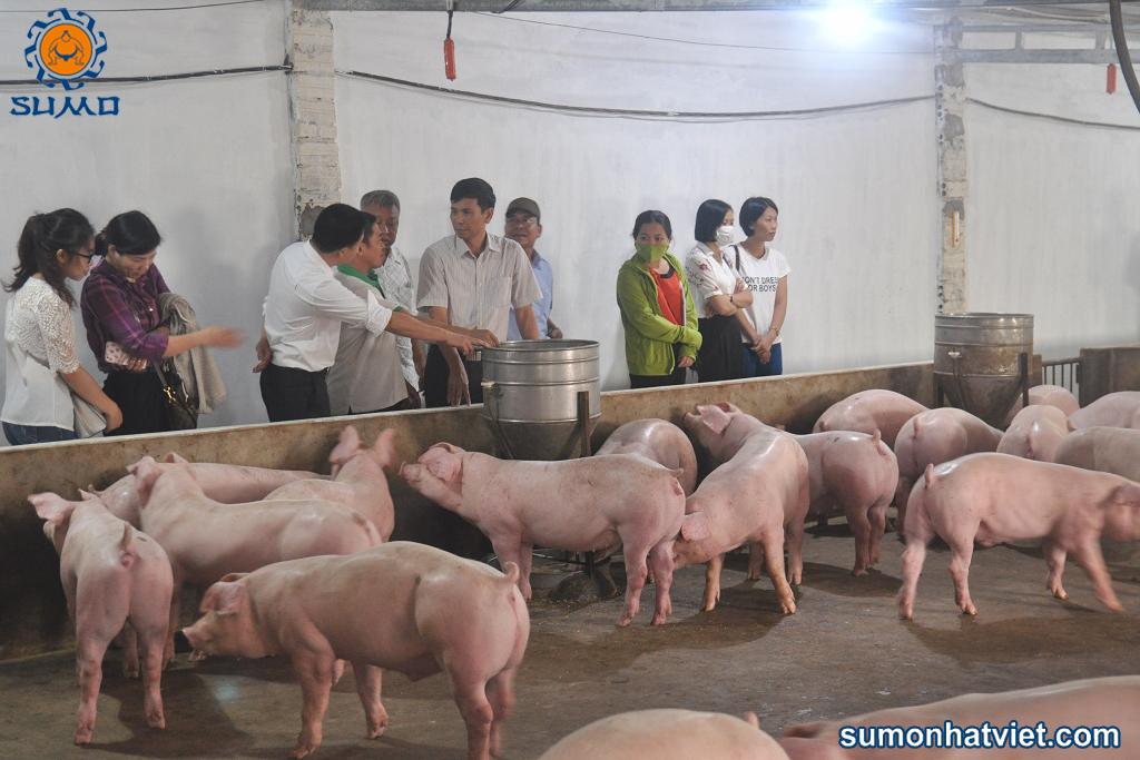 Mô hình nuôi lợn sử dụng chế phẩm sinh học hữu cơ