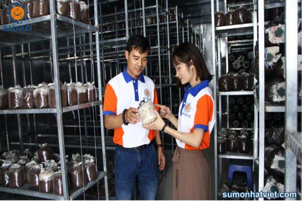 Phòng sản xuất phôi nấm mối đen Sumo Nhật Việt