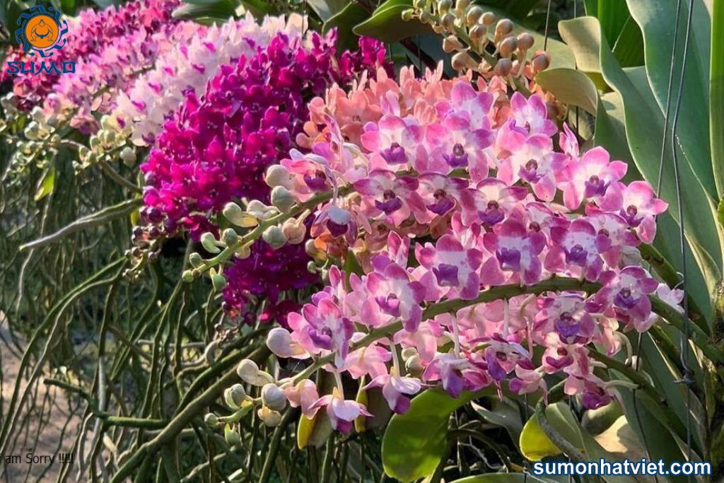Lan Ngọc Điểm có nhiều màu sắc và hương thơm khác nhau