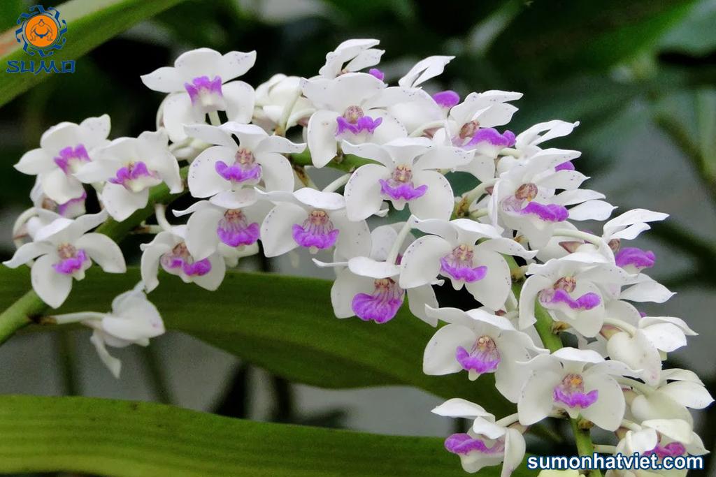 Cây mạnh khỏe sẽ cho hoa to đẹp
