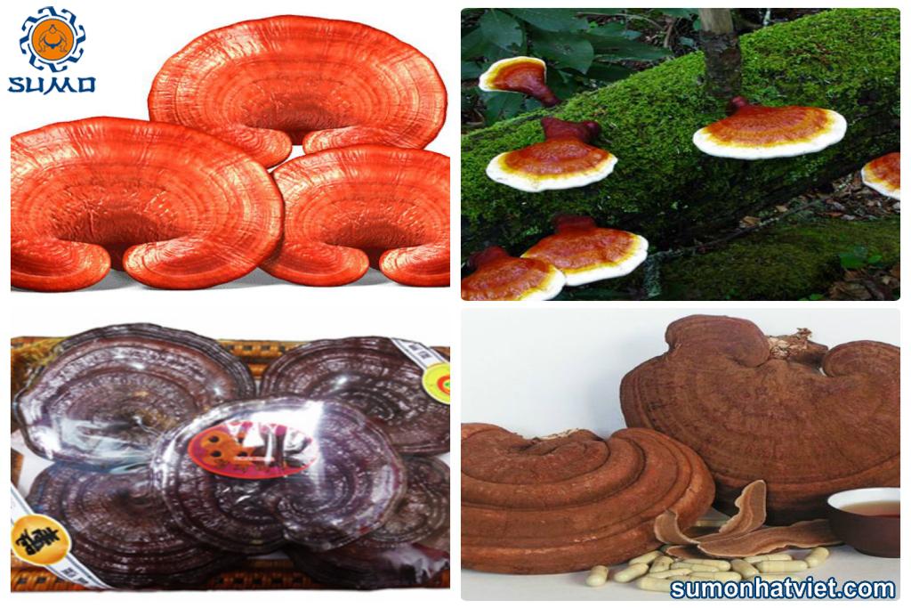 Tìm hiểu nấm linh chi đỏ 1kg bao nhiêu