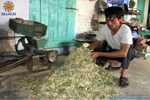 Cách sử dụng mật rỉ đường Sumo bổ sung vào thức ăn cho vật nuôi