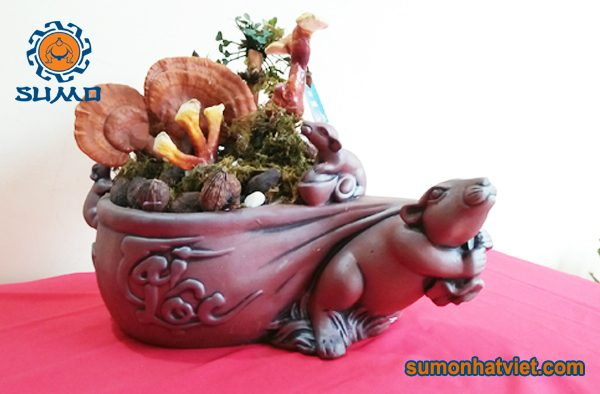 Bonsai Linh Chi tài lộc Sumo