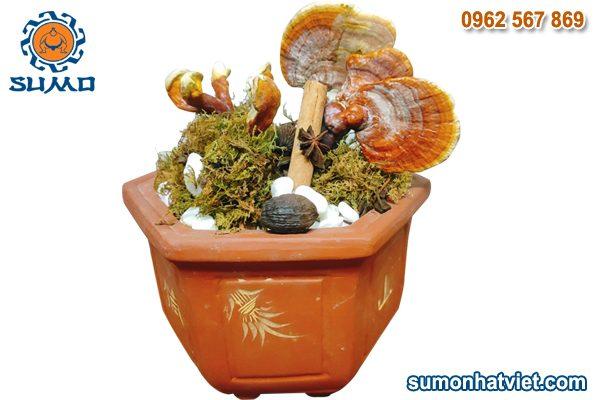 Nấm linh chi Bonsai