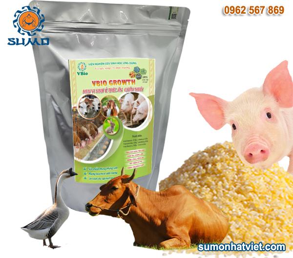 Mem vi sinh ủ thức ăn chăn nuôi