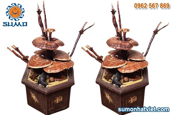 Bonsai linh chi chơi tết
