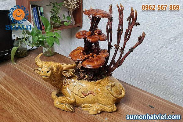 Bonsai nấm Linh Chi hương quế