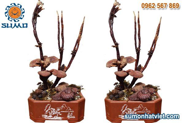 Linh Chi bonsai phong thủy